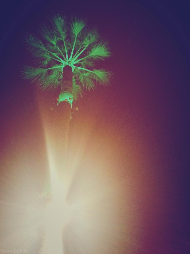 palmen3